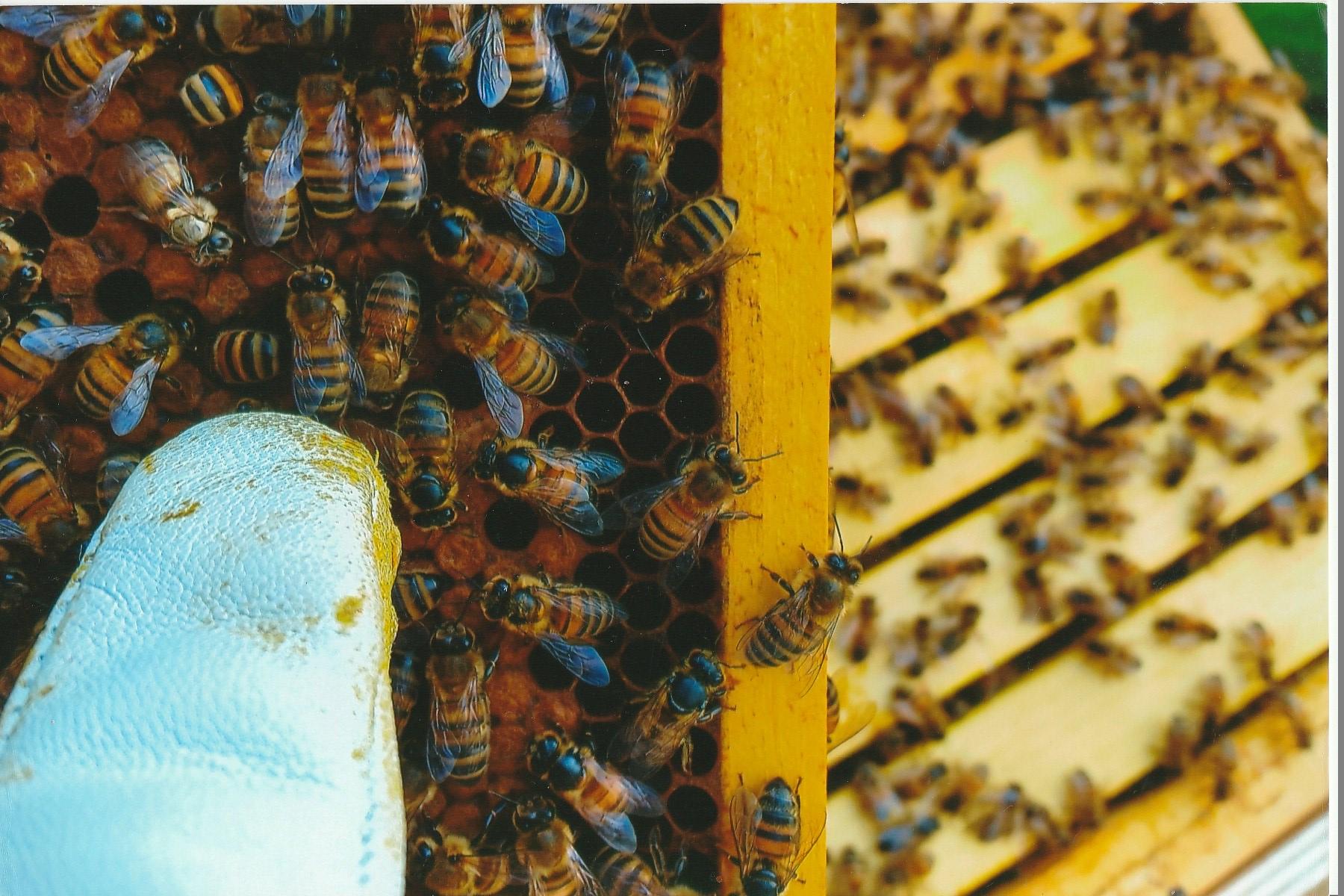 Summ, summ, summ, wir sind im Bienenmodus…