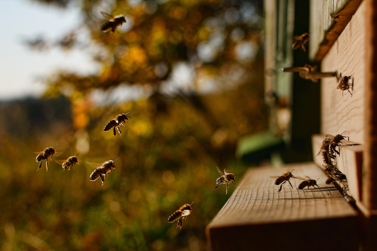 Schnupperabend Bienen und Imkerei